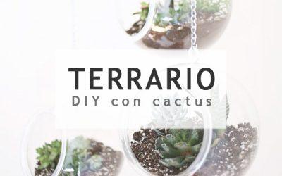 Terrario de cactus DIY